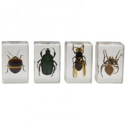 3D Bug Specimen Set no2